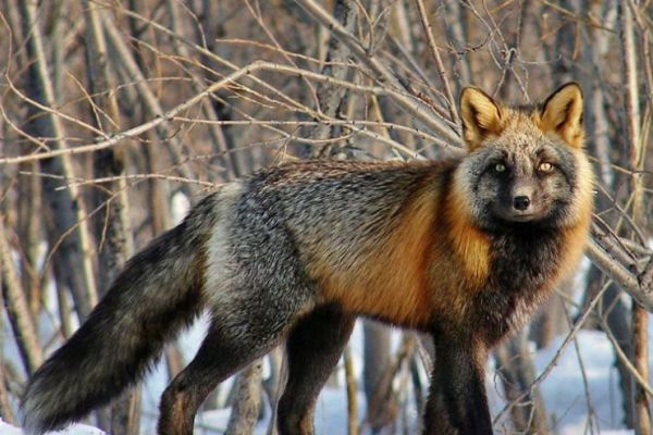Action against using of fur will take place in Nizhny Novgorod, Russia